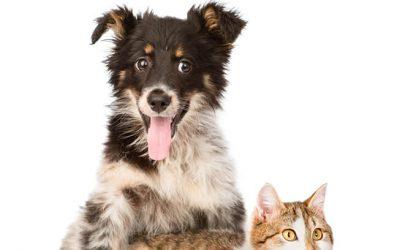 veterinaria_vicopharma